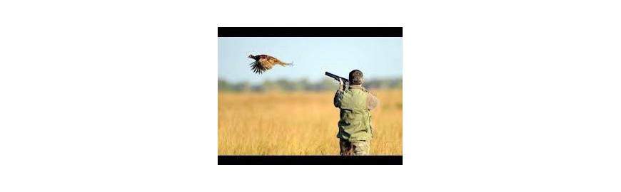 Accessoires chasse aux pigeons
